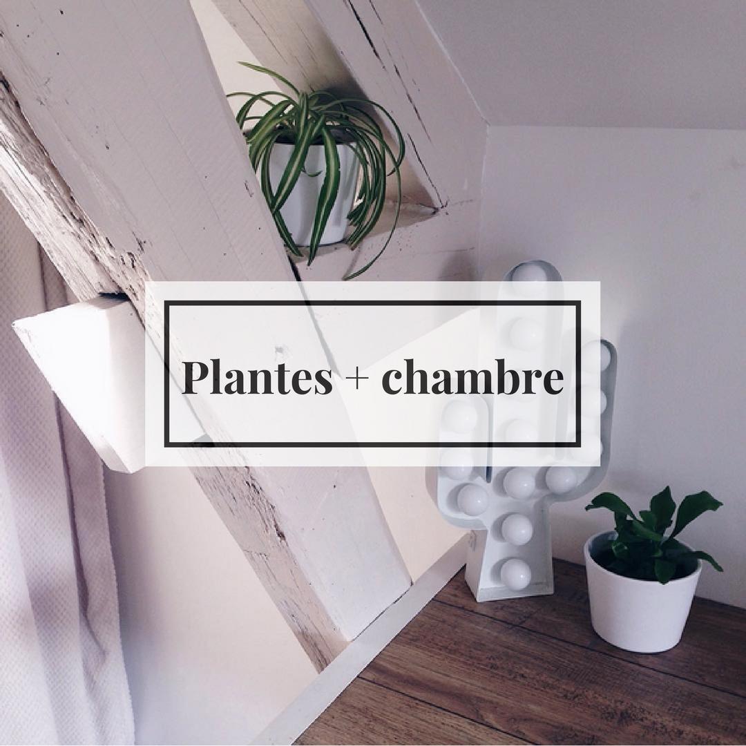 les plantes dans la chambre, oui ou non ? – littlenavire